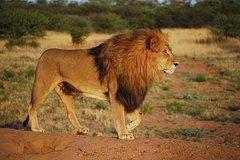 3-Day Serengeti Guided Safari from Mwanza