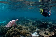 Imagen 4 Day Ningaloo Reef Snorkel and Dive Getaway from Coral Bay