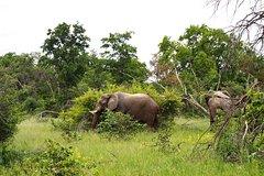 2 Days Mokoro in Okavango Delta, Botswana