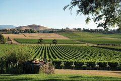 Melbourne Shore Excursion: Yarra Valley, City Sights and Australian Wildlife