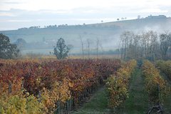 From Parma: Private Wine tour with tasting