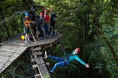 Imagen Original Rotorua Forest Zip Line Canopy Adventure