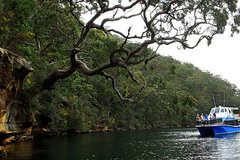 Imagen Ku-ring-gai Chase National Park Day Trip from Sydney