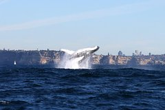 Sydney Harbour Ferry with Taronga Zoo Entry ticket and Whale Watching Cruise