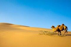 Gobi Desert Tour - 9 Days