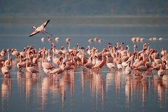 6and4 Days Safari and Beach Tanzania