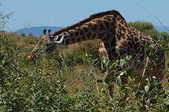 4 Days Lodge Safari Tarangire Ngorongoro Crater and Serengeti-