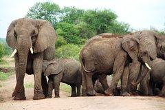 4-Day Encounter the Kruger Park