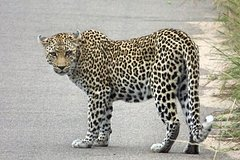 3 Day All Incl- Private Kruger Park Safari with Optional Skukuza Airport PU