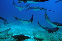 Excursions,Activities,Activities,Multi-day excursions,Water activities,Water activities,Adventure activities,Sports,