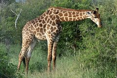 4 Day All Incl- Private Kruger Park Safari With Optional Panorama and Boat Tour