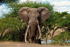 3 Day All Incl- Private Kruger Park Safari Incl- Transfer From Nelspruit Airport