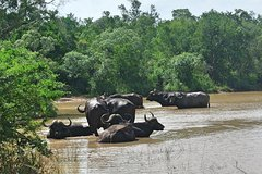 4 Day All Incl- Private Kruger Park Safari Incl- Transfer From Johannesburg