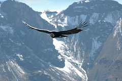 Imagen Apurimac Canyon with Condor Viewing from Cusco