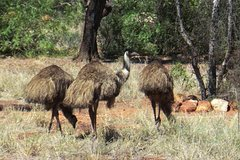 5-Day Outback Farm and Wildlife Experience from Brisbane