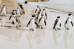 Best of the Cape Peninsula - Private Tour