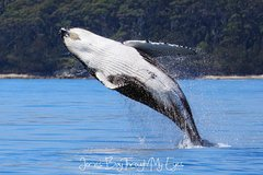 Imagen Whale Watching Jervis Bay