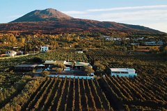 Organic Wine Tasting & Lunch on Vesuvius with Transfer from Sorrento Pe