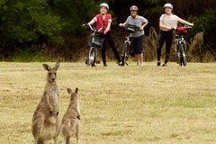Imagen Canberra: 7 Hour Canberra Discovery, Tidbinbilla Wildlife and Electric Bike Tour
