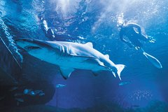 Imagen AQWA: 2-Hour Snorkel with Sharks Experience