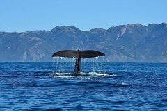 Imagen Kaikoura Day Tour with Whale Watching
