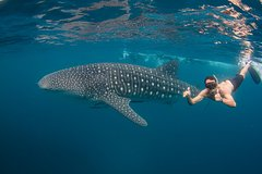 Imagen Ningaloo Reef Whale Shark Snorkeling Adventure from Exmouth