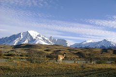Torres del Paine Day Trip from Puerto Natales