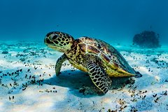Turtle and Reef Adventure