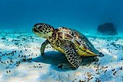 Imagen Turtle and Reef Adventure
