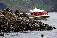 Imagen 3-Hour Bruny Island Cruise from Adventure Bay