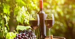 Livorno shore excursion: Tuscany countryside - Private 3 Wineries Chianti a