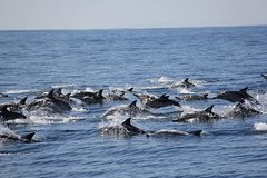 Imagen Swim With Wild Dolphins in Tauranga