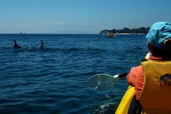 Imagen Mornington Peninsula Self-Guided Kayak Adventure for Two