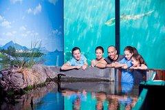 Imagen Reef HQ Great Barrier Reef Aquarium General Entry Ticket