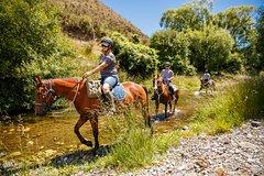2-5hr Horse Trek