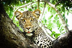 7-Day Kruger and Vic Falls Small Group Safari from Pretoria