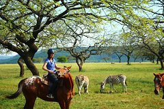 7-Day Kruger Swaziland and Beach Adventure Accommodated Tour from Pretoria