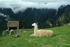 Imagen 8-Day Tour from Lima: Machu Picchu and the Amazon Jungle