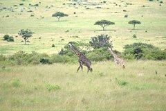4 Days Masai Mara lake Nakuru budget safari
