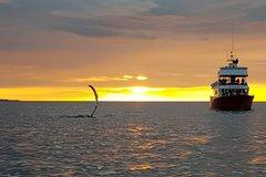 Actividades,Actividades,Actividades acuáticas,Actividades acuáticas,Salidas a la naturaleza,Deporte,Avistamiento de ballenas