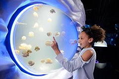 Imagen Skip the Line: Sea Life London Aquarium