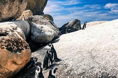 Best Of Cape Private Tour(Cape Of Good Hope Cape Point and Stellenbosch Winelands)