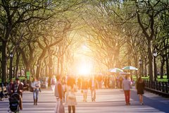 City Rambler NYC: The Essential Central Park Walking Tour