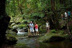 Daintree and Cape Tribulation Rainforest
