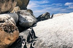 Cape of Good Hope Small Group Tour
