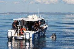 Imagen Hervey Bay Whale Swim and Watch