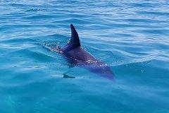 Imagen Dolphins and Seals Wildlife Scenic Boat Tour Mornington Peninsula