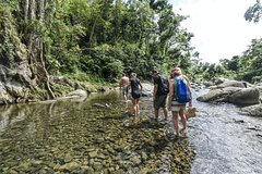 Excursions,Activities,Activities,Full-day excursions,Adventure activities,Nature excursions,Nature excursions,Excursion to El Yunque National Park