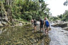 Salir de la ciudad,Actividades,Actividades,Excursiones de un día,Actividades de aventura,Salidas a la naturaleza,Salidas a la naturaleza,Excursión a Parque Nacional El Yunque