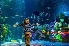 Imagen Billet coupe-file AquaDom et SEA LIFE Berlin
